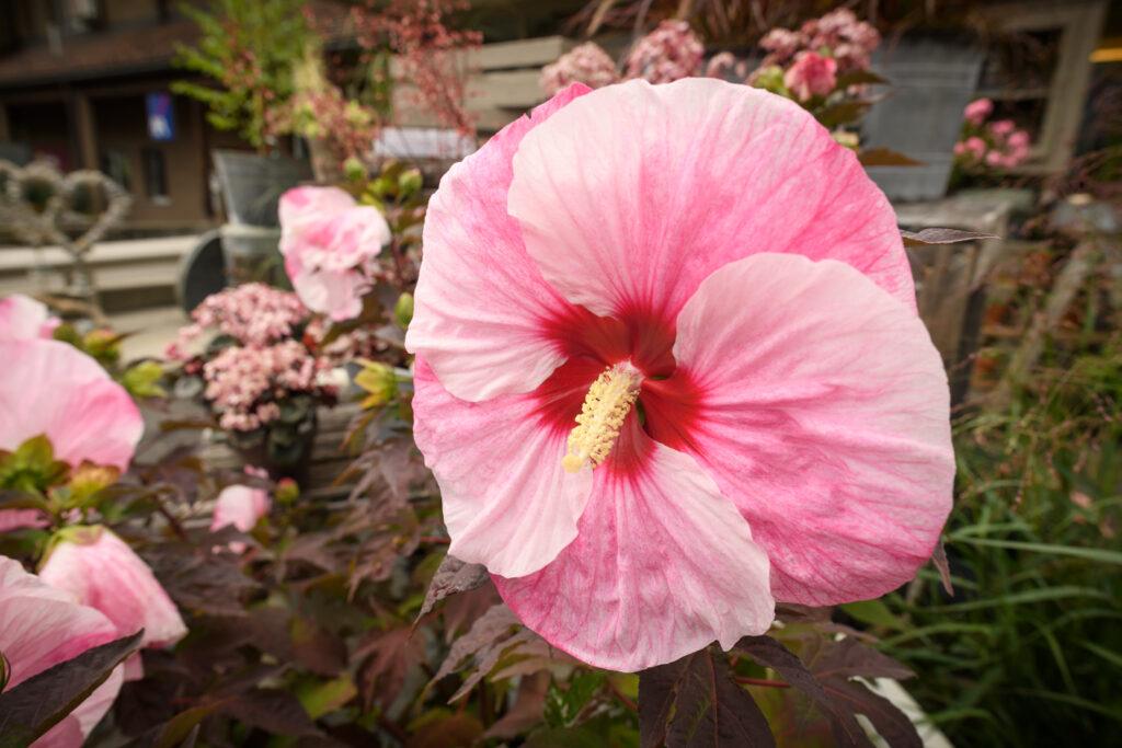 Blüten-Bijou - Impressionen